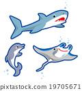 鯊魚 海豚 黃貂魚 19705671