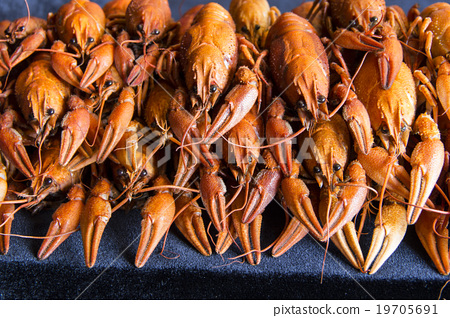 Many crawfishes 19705691
