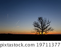 Tree silhouette by sunset 19711377