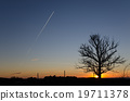 Silhouette of a lone tree 19711378