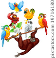 Chimpanzee and many birds on the branch 19716180