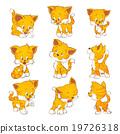 cute yellow cat 19726318