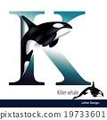 Vector Letter K is Killer Whale alphabet.  19733601