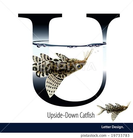 Vector Letter U is Upside Down Catfish alphabet. 19733783