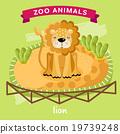 사자, 벡터, 동물원 19739248