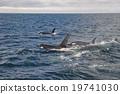 동물, 포유류, 바다 19741030