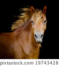 Back shot of a horse 19743428