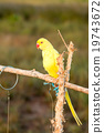 Parrot on a perch on wooden 19743672