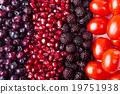背景 石榴 藍莓 19751938