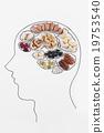 螺帽 大腦 卡路里 19753540