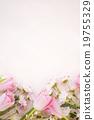 植物 花卉 花朵 19755329