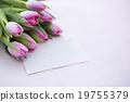 花朵 花 花卉 19755379