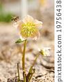 花朵 植物 蜜蜂 19756438