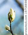 背景 花朵 花 19756698