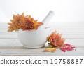 花卉 美女 美 19758887