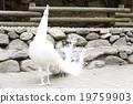 動物園 照片 動物 19759903
