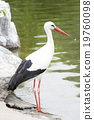 動物園 照片 動物 19760098