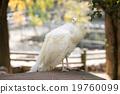 動物園 鳥 鳥兒 19760099