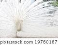 照片 動物 鳥兒 19760167