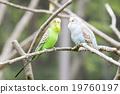 動物 照片 鳥兒 19760197