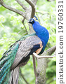 動物園 鳥 鳥兒 19760331