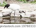 動物園 起重機 鶴 19760333