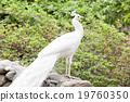 照片 動物 鳥兒 19760350