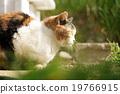 Mikane猫 19766915