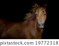 Back shot of a horse 19772318