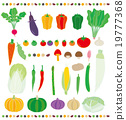 蔬菜 食材 原料 19777368