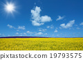 Flower field and blue sky with sun 19793575