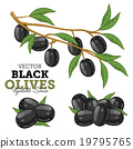 Olives with leaves, Vector 19795765