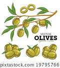 Olives with leaves, Vector 19795766