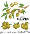 olive, fruit, olives 19795766