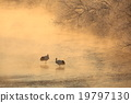 Cranes of the Snow River 19797130