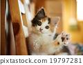 cat 19797281