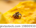 jumper spider on yello leaf 19800930