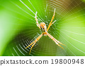 Spider on the web 19800948