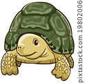 烏龜 動物 爬行動物 19802006