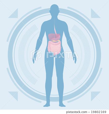 人體輪廓和器官醫學界面 19802169