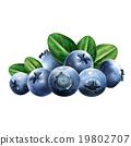 藍莓 水果 向量 19802707