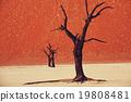 Namib 19808481
