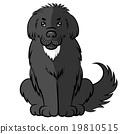 dog furry big 19810515