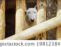Dog behind the Fence 19812384