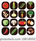 Set of different kinds of vegetables. 19816092