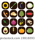 Set of different kinds of vegetables. 19816093