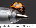 Ladybug closeup. 19825118