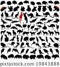 Hundred silhouettes of animals from Australia 19843888