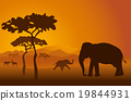 Silhouettes of elephants in Kilimanjaro 19844931