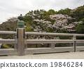 Ise神社春天Ujibashi風景與櫻花 19846284